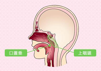 口蓋垂と上咽頭の位置